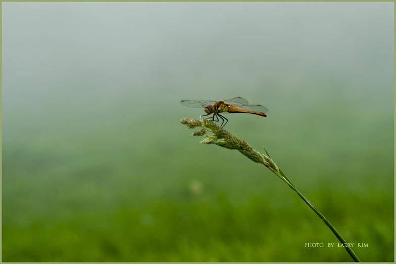 Dsc_3018-mail-600-a_dragonfly